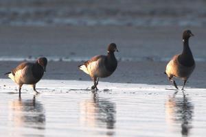 Birdwatching Safari